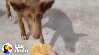Takis Gives Hungry Stray Dog His Lunch To Gain Her Trust | The Dodo