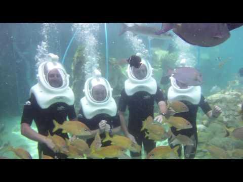 SeaVenture at Discovery Cove | SeaWorld Orlando