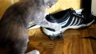Смешные кошки и котята,ловят мышку!)))
