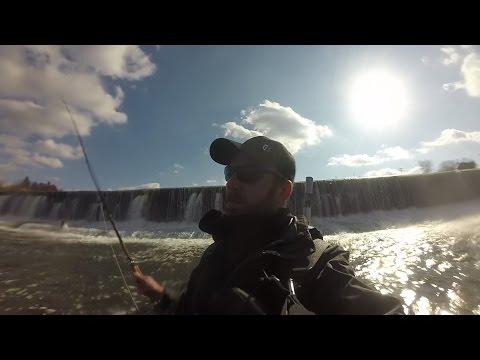 Oswego dam fishing for steelhead
