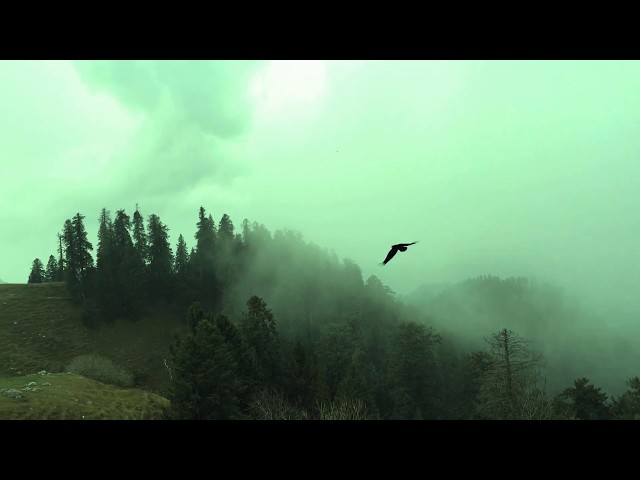 Crow at Nathyagali | Slow Motion | Crow Call Sound