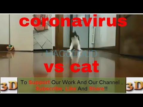 3d Coronavirus Vs Cat