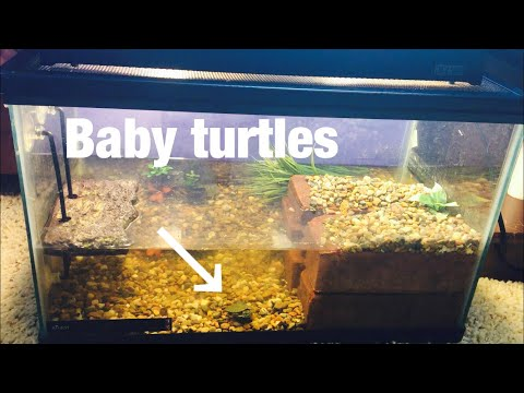NEW BABY TURTLE TANK!