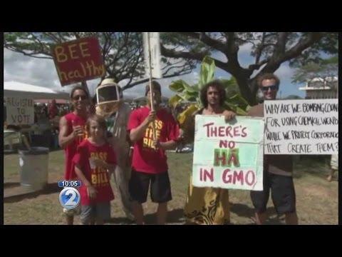 County of Kauai sued over GMO law