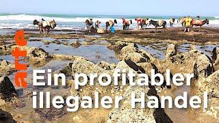 Marokko: Die Geschäfte der Sandmafia | ARTE Reportage