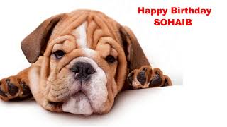 Sohaib  Dogs Perros - Happy Birthday