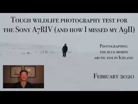 Tough wildlife photography test for the Sony A7RIV (and how I missed my A9II) (February 2020)