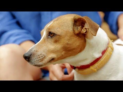 Вопрос: Какой корм для похудения собаки посоветуйте если аллергия на курицу?