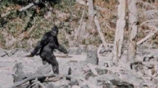 Mysteries - Bigfoot