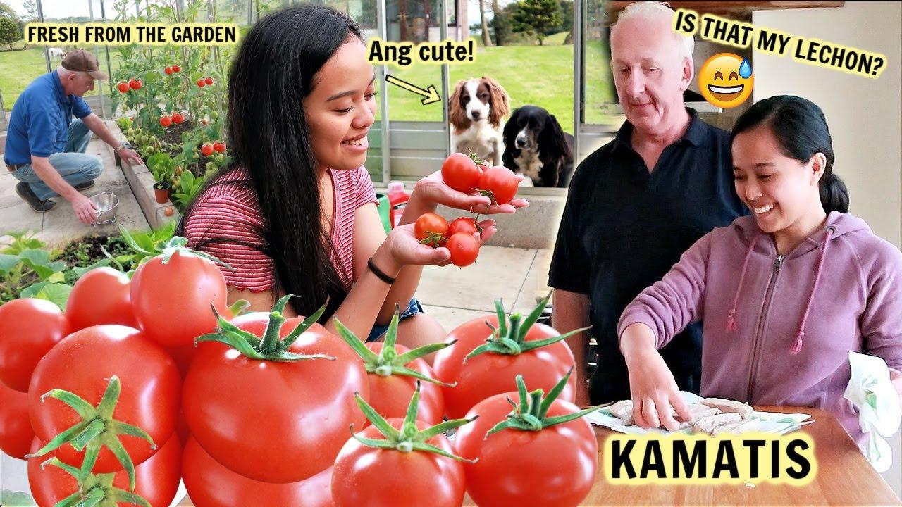 FILIPINA BRITISH LIFE IN UK: UNANG HARVEST NG MGA KAMATIS!