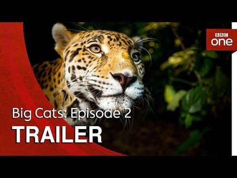 Big Cats: Episode 2 | Trailer - BBC One