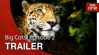Big Cats: Episode 2 | Trailer - BBC One