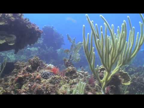 Meet the Central Caribbean Marine Institute