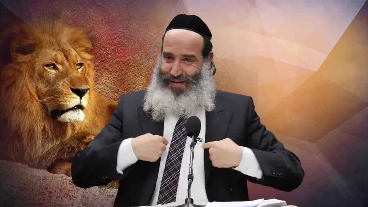 חדש! מה קרה לרב פנגר עם האריות בדרום אפריקה HD מומלץ!