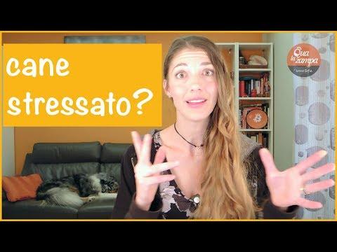 Come riconoscere un cane stressato? | Qua la Zampa