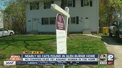 51 sick cats, 8 dead removed from Glen Burnie home