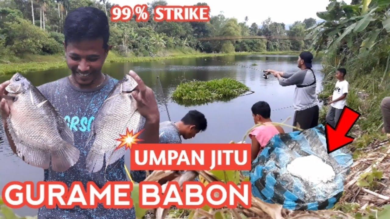 Mancing Ikan Gurame Babon Umpan Jitu 99 Strike Youtube
