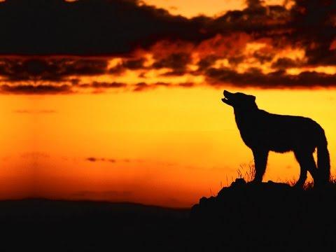 刀郎《披着羊皮的狼》DaoLang,Wolf in Sheep's
