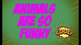 Animals are so funny