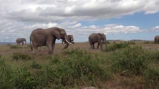 象はそこいらじゅうに腐るほどいましたね。