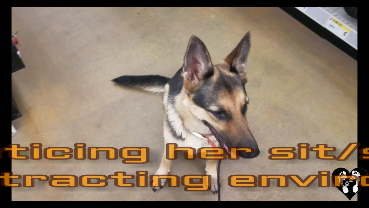 Dog Training Beaumont
