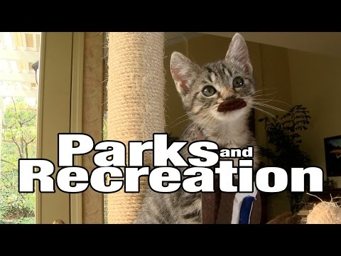 Parks and Recreation (Cute Kitten Version)