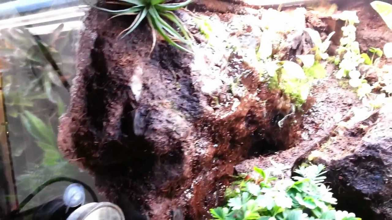 mon terrarium tropical humide pour dendrobates avec sa cascade youtube. Black Bedroom Furniture Sets. Home Design Ideas
