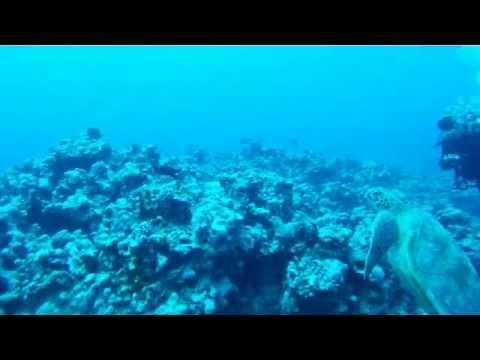Scuba Diver Girls Dive with Sea Turtles in Aitutaki