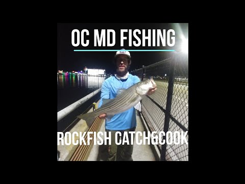 Ocean City MD Fishing For Rockfish,Bluefish,Tautog And Shad.(Crispy Garlic&Butter Rockfish)