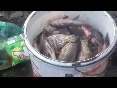 Pescuit caras mare,cu sacu, la canalul Sireasa -Delta -Dunarii 10-11-2013