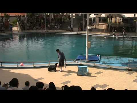 Underwater World Singapore - Live Dolphin & Seal Performance