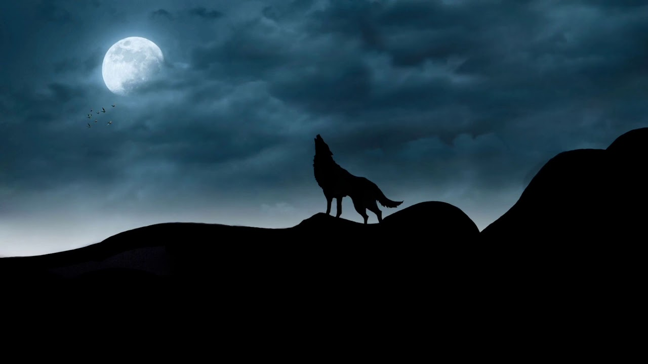 Wolfhowling Lifehuntbyphr Scary Wolf Howling At The Moon In Mid Nights Youtube