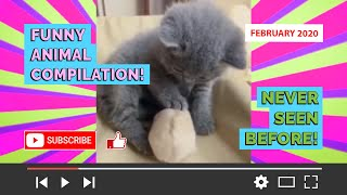 FUNNY ANIMAL COMPILATION! Try not laugh! DISCO ALPACA! (February 2020) WATCH NOW! Never seen before!
