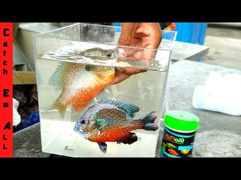 SUNFISH AQUARIUM! **New GLOWFISH Species**