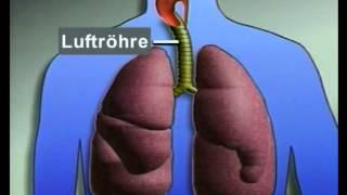 Der Mensch: Die Atmung