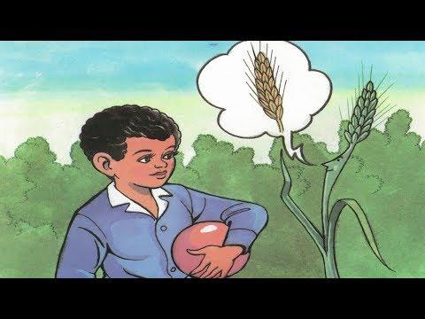 قصة سنبلة القمح الخضراء - قصص قبل النوم للاطفال
