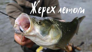 Жерех голавль на спиннинг летом Рыбалка сплав по реке Осетр