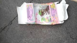 Peter cottontail chocolate stomping death