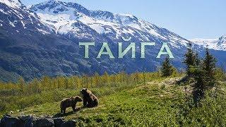 Тайга - песня для детей - клип Собака в тайге - Лансере  / Taiga - song for children