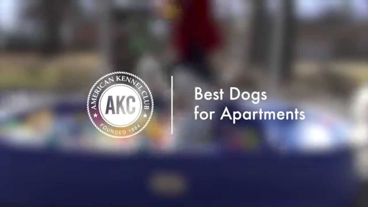 best dogs for apartments - youtube