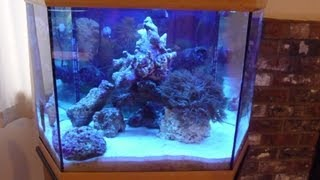 Petstore Employees 42 Gal. Hexagon Reef Aquarium