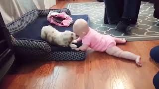Babies And Dogs Laugh Time