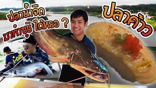 ทำซูชิด้วยปลาน้ำจืดไทย ทำได้จริงหรอ? [คนหลงรส] EP.3