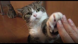 ハイタッチとまるとはな。-High five and Maru&Hana.-