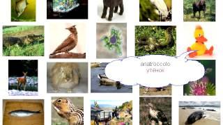 Урок 269 животные