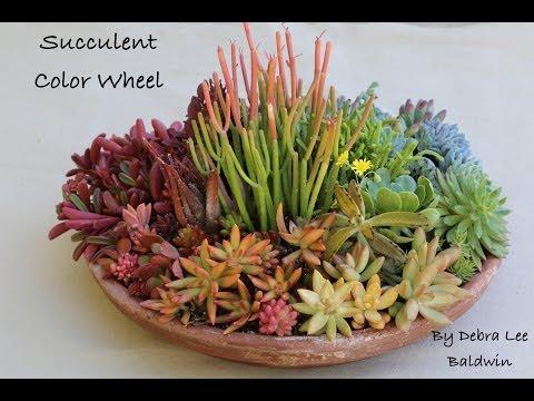 Create A Succulent Color Wheel In A Pot Youtube