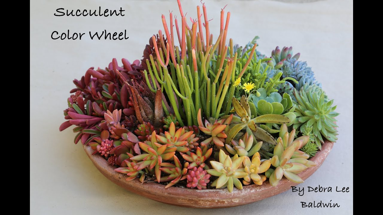Create a Succulent Color Wheel in a Pot   YouTube