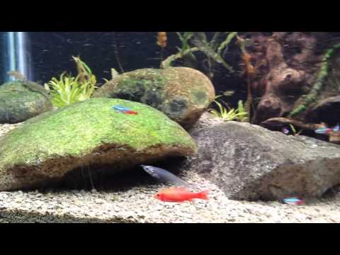 Community Planted Fish Tank With Cat Litter Substrate Pt. 1