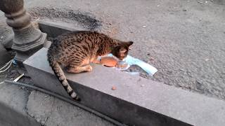 Кормлю бездомного кота whiskas! Feeding a homeless cat whiskas!
