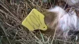 Незаконный скотомогильник может привести к экологической катастрофе, Блокнот Россоши, ноябрь 2018